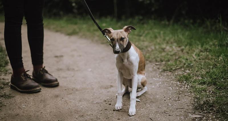 Έξι μήνες φυλάκιση για άνδρα που σκότωσε σκύλο
